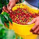 Кофе - один из популярнейших напитков мира