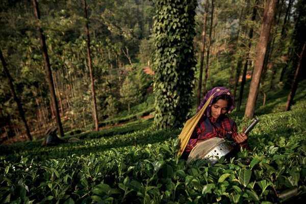 Кофе из Азии, Индии и Африки