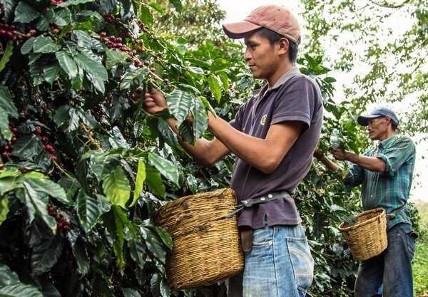 Кофе из южной и центральной Америки