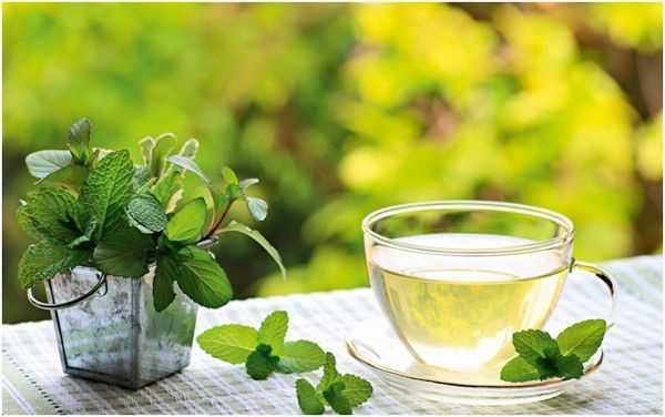 чай с мятой на природе
