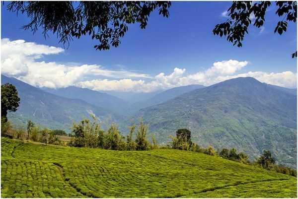 голубые горы в Индии