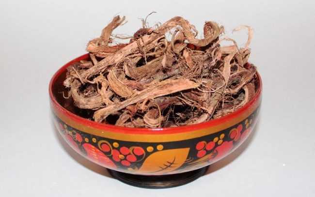 корень копеечника сухой