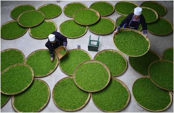 обработка чая