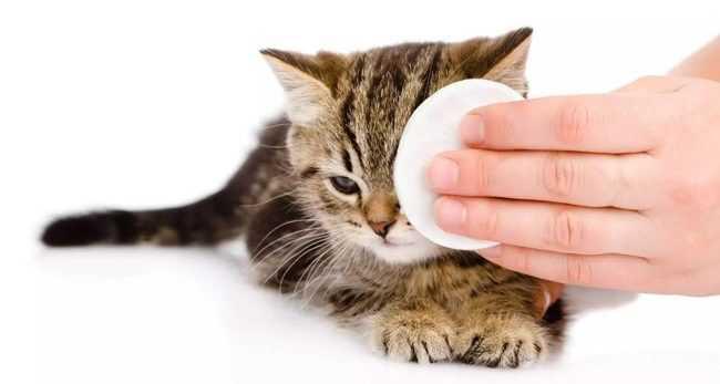 промываем глаза котенку