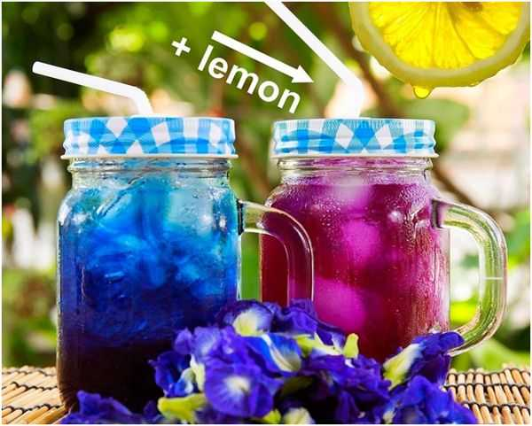 синий чай с лимоном и без