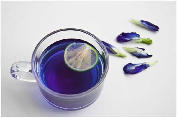 синий чай тайский