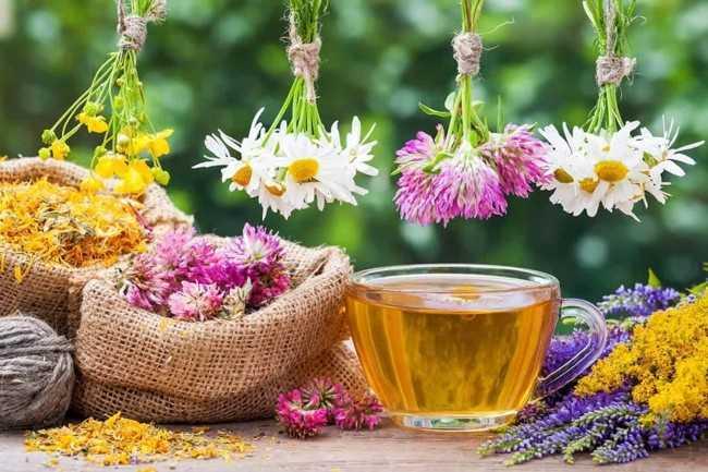 травы для заваривания чая