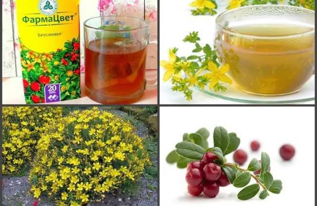 травяной чай бруснивер