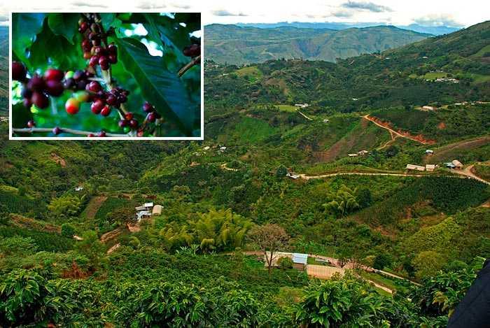 кофейные плантации